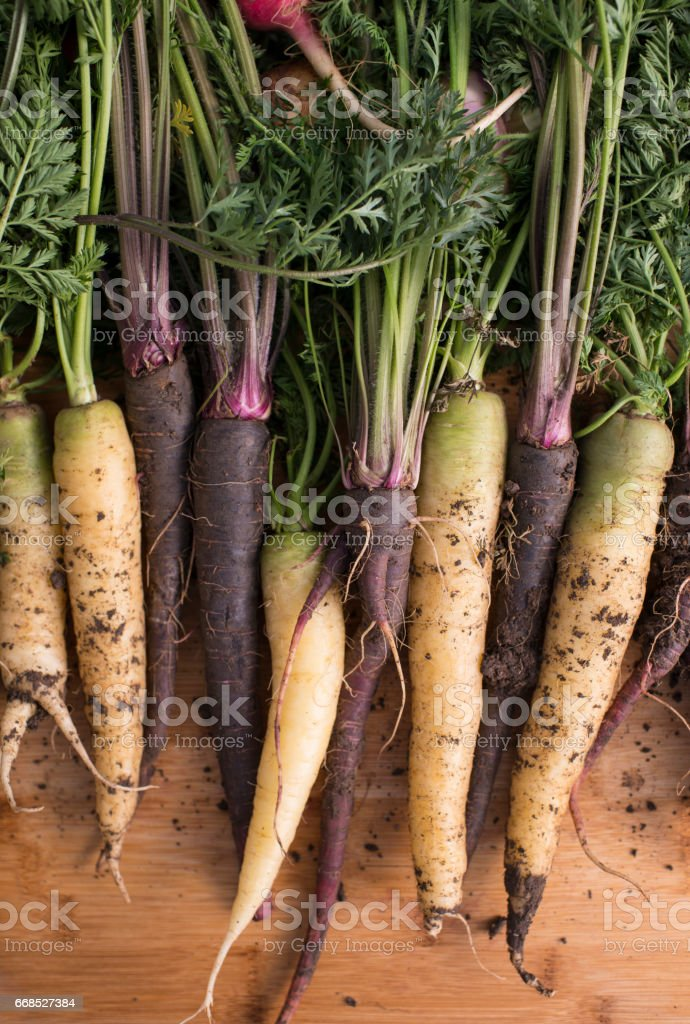 Top view of fresh carrot with soil and leaves. stock photo