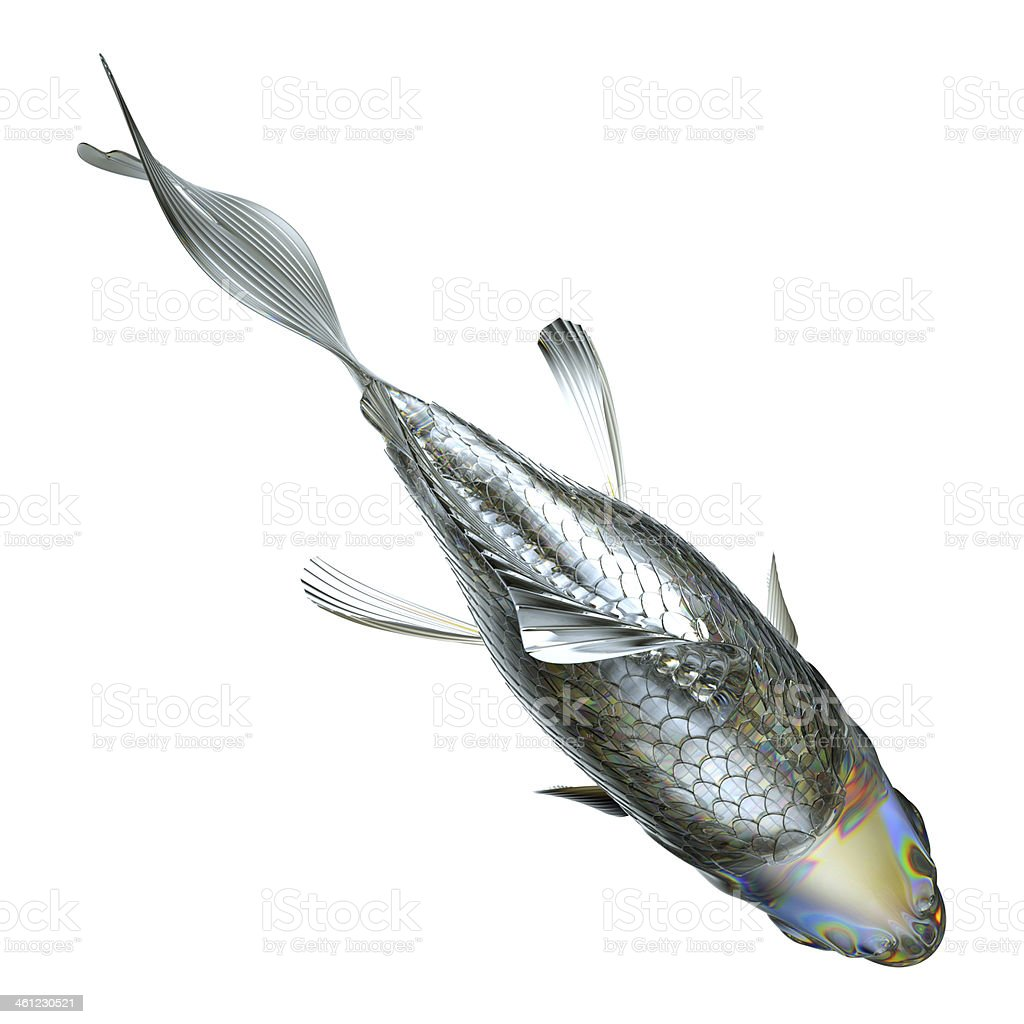 Top view of glass fish isolated royalty-free stock photo