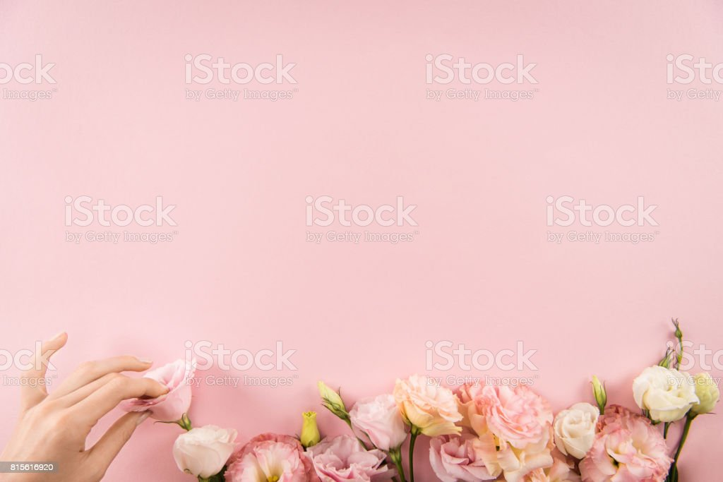 Top view of hand arranging beautiful tender flowers isolated on pink background stock photo
