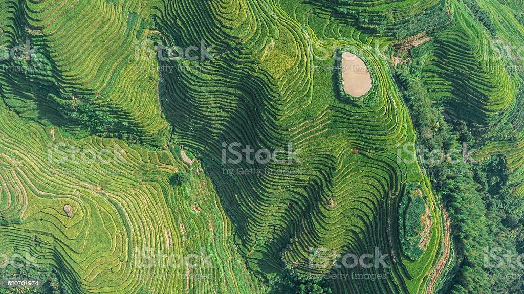 Top View of Longji Rice Terrace stock photo