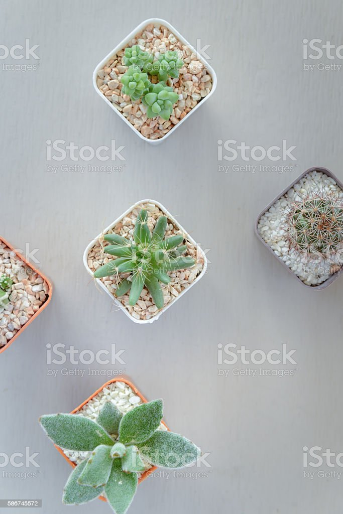 Top view of small cactus plant in flowerpot stock photo