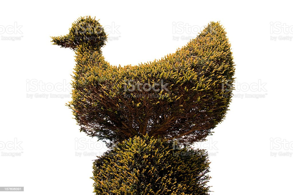 Topiary Bird stock photo
