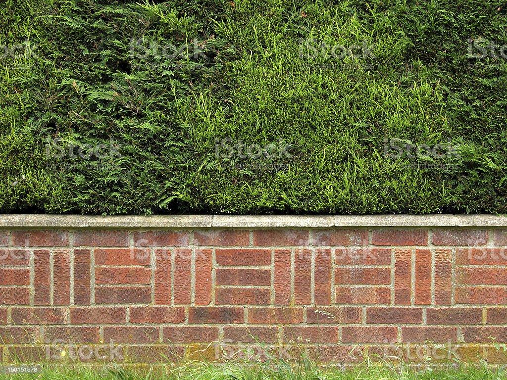 Topiary bush wall hedgerow royalty-free stock photo