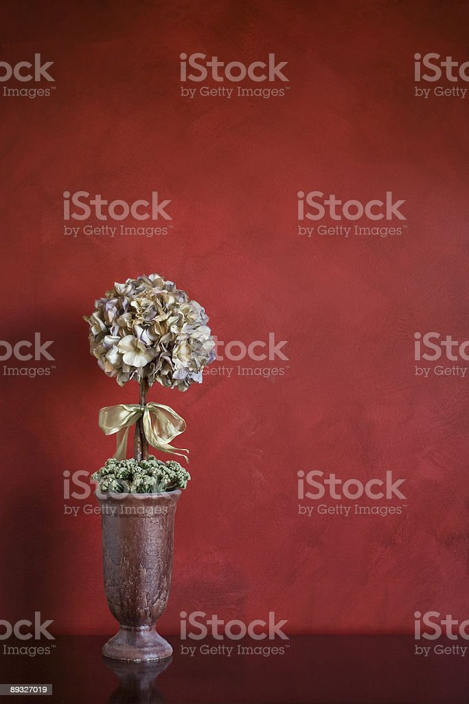 Topiary on a Table royalty-free stock photo