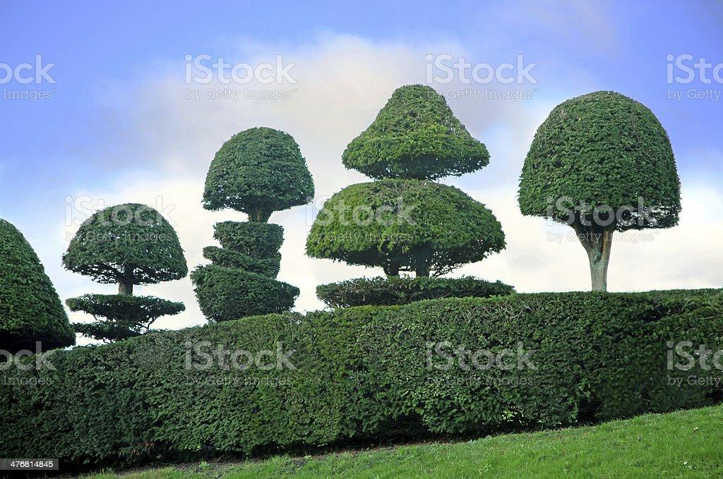 topiary trees stock photo