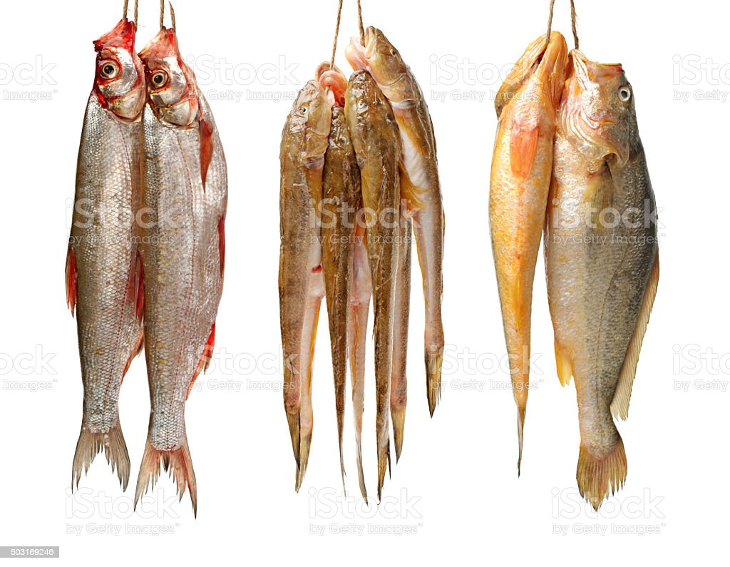 Topmouth culter,yellow croaker fish and the sea catfish stock photo