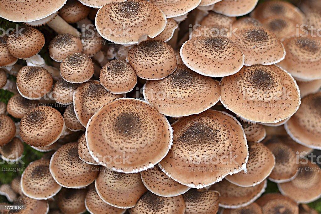 Encimeras de tipo seta. foto de stock libre de derechos