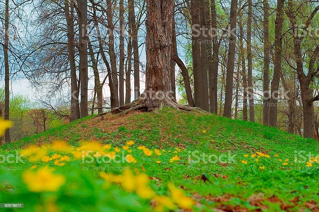 To-put-down-roots-in royalty-free stock photo