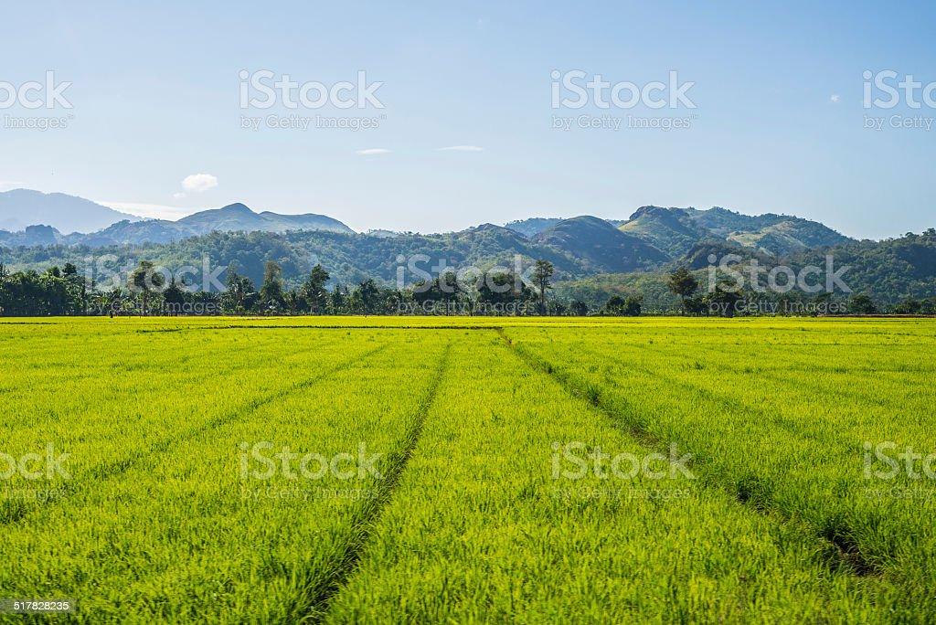 Toraja landscape stock photo
