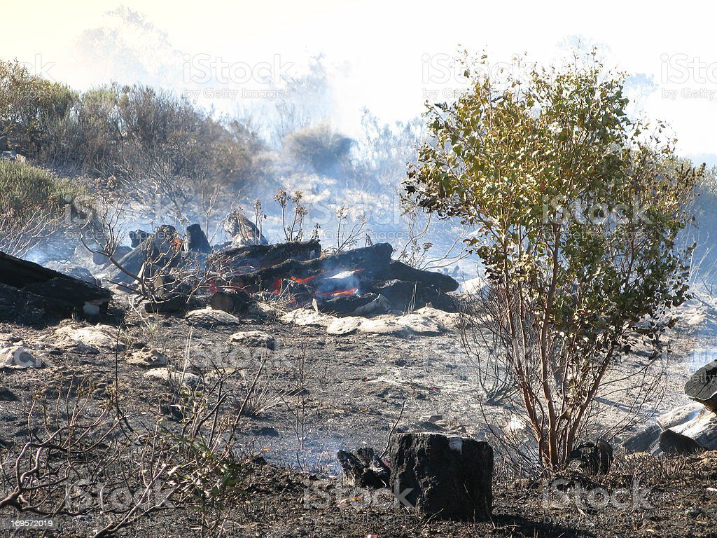 Torched landscape royalty-free stock photo
