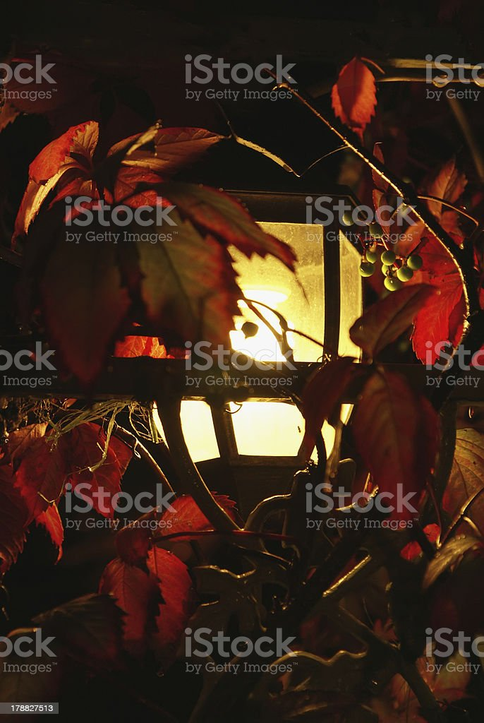 torch-light at night and leaves of vine royalty-free stock photo