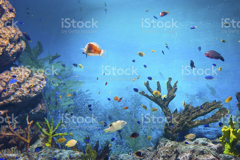 torpical fishes at Seoul Coex Oceanarium royalty-free stock photo