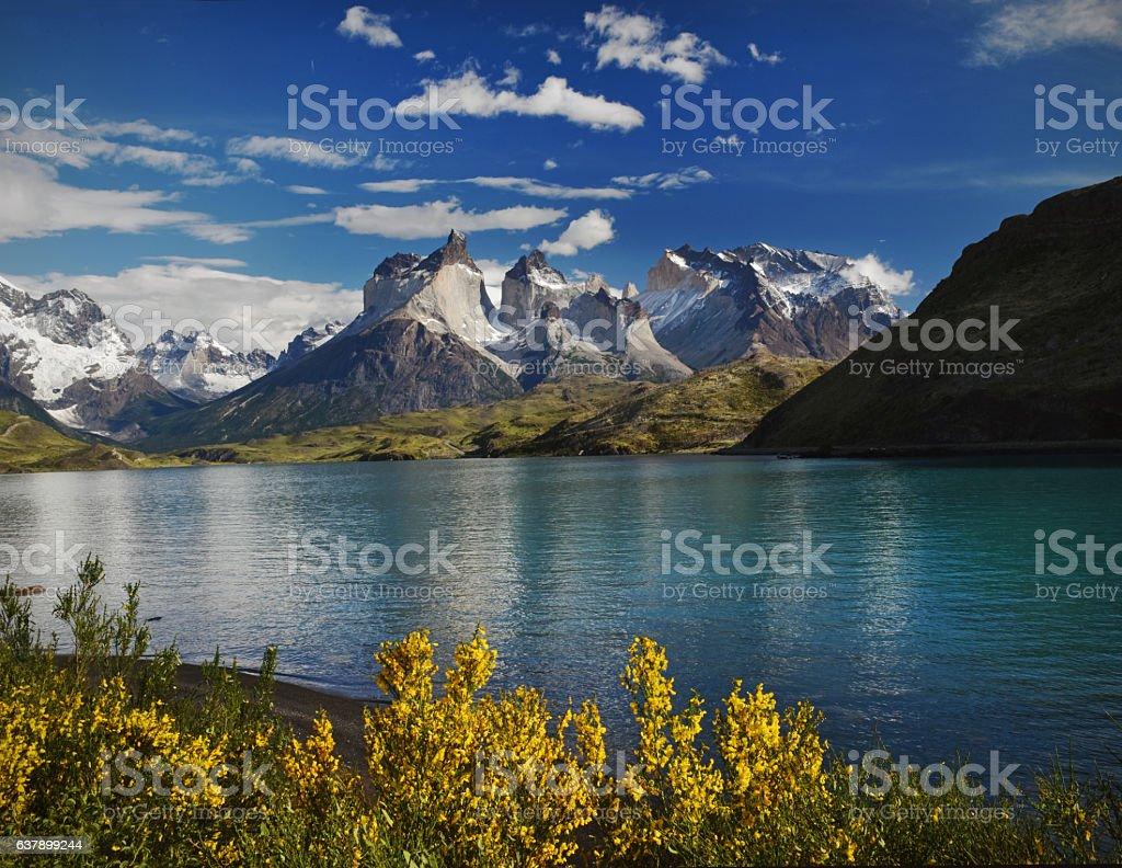 Torres yellow gorse stock photo