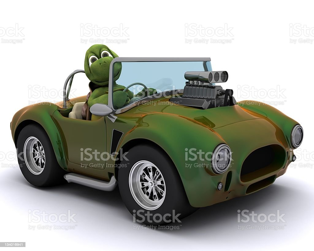 tortoise driving a car stock photo