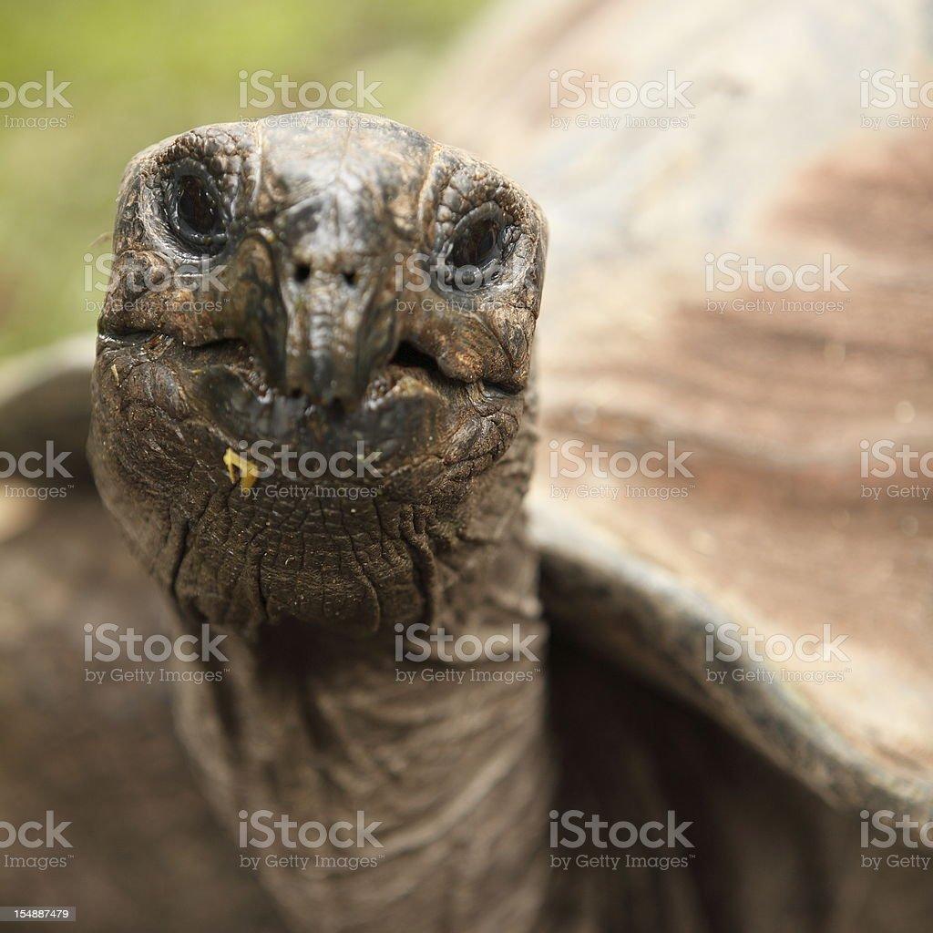 Tortoise Head stock photo