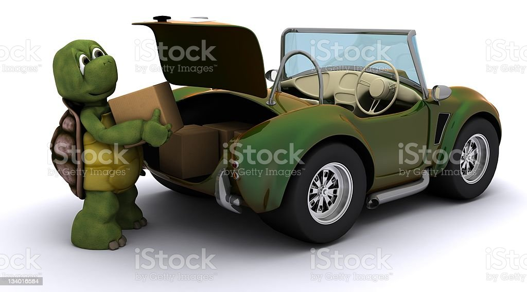 tortoise loading boxes in  a car stock photo
