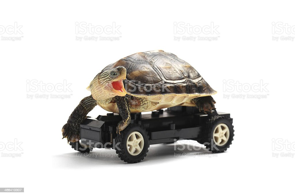 Tortoise on Wheels stock photo