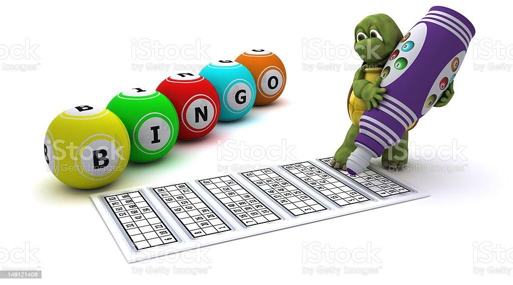 Tortoise playing bingo stock photo