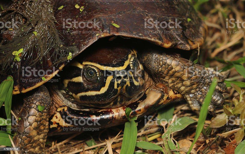Tortoise Reptiles stock photo