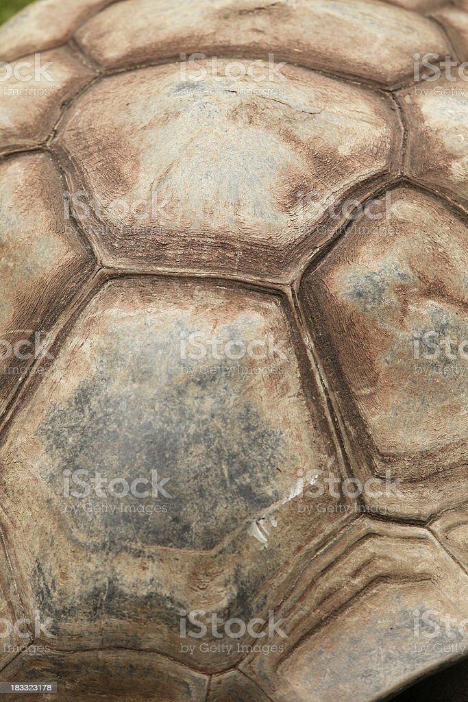 Tortoise Shell stock photo