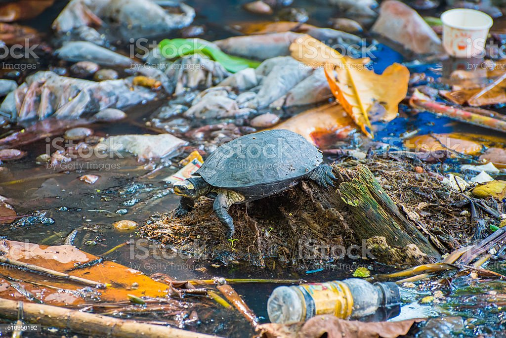 Tortoise surrounded by polluted water stock photo