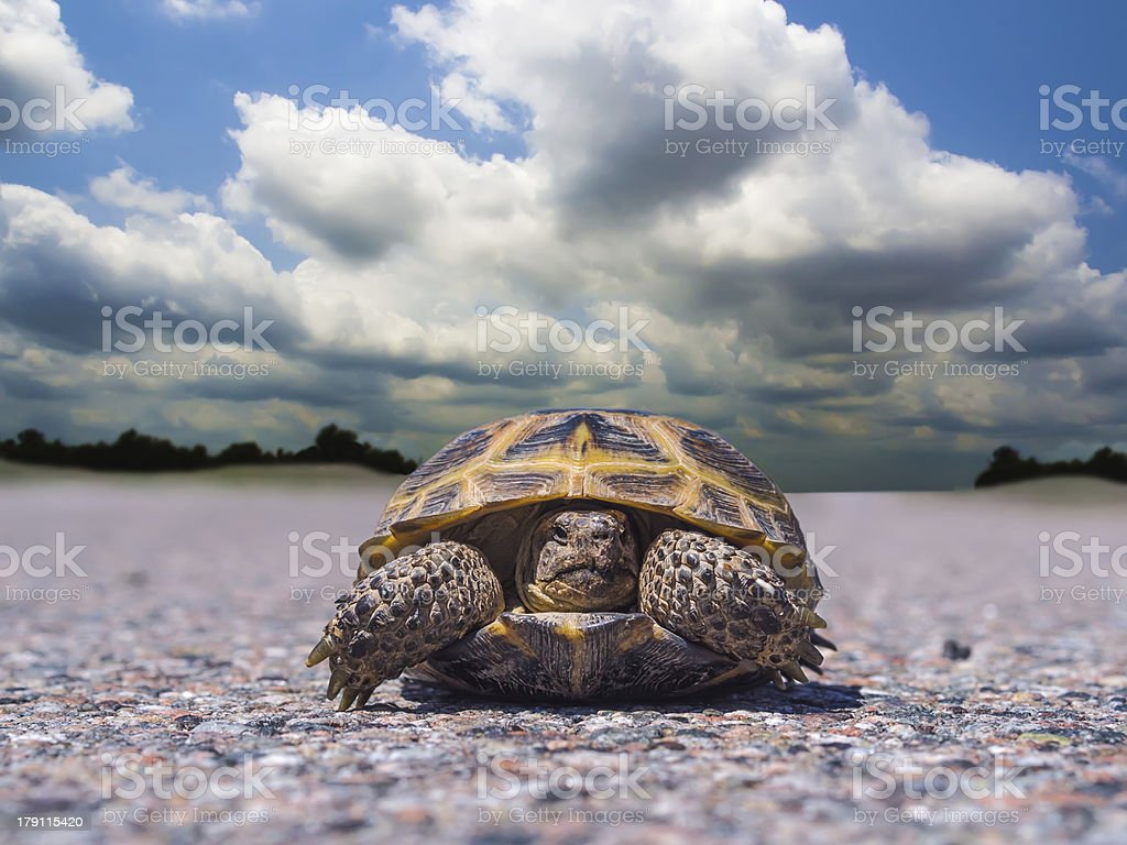 Tortoise traveler stock photo