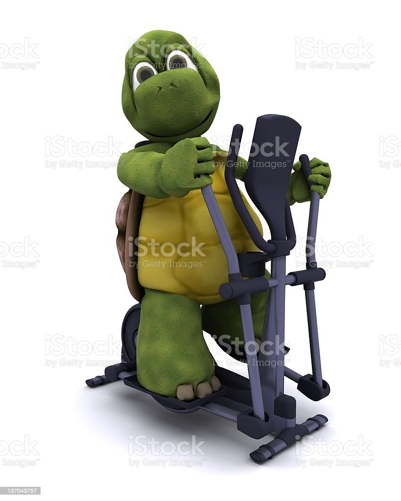 Tortoise with a cross trainer vector art illustration