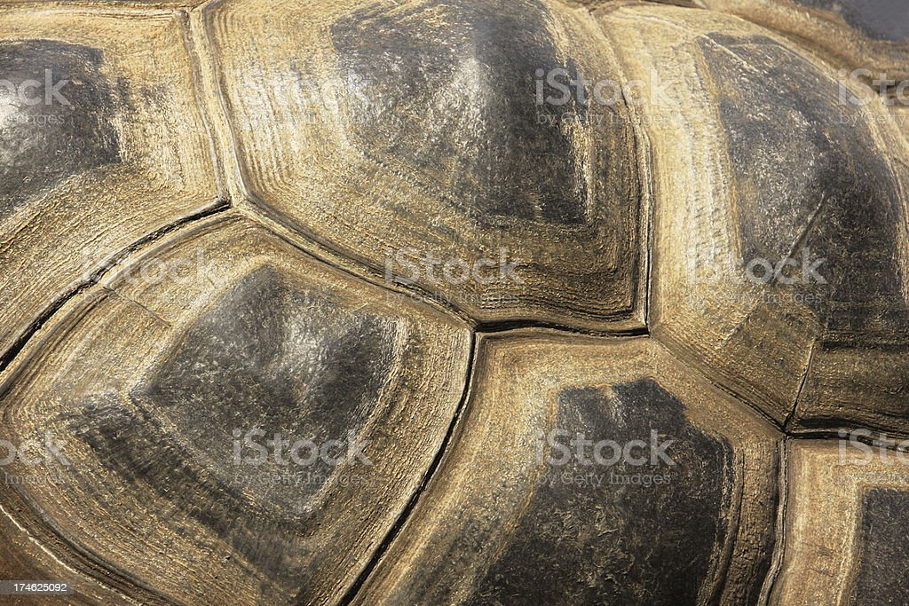 Tortoiseshell Turtle Exoskeleton stock photo