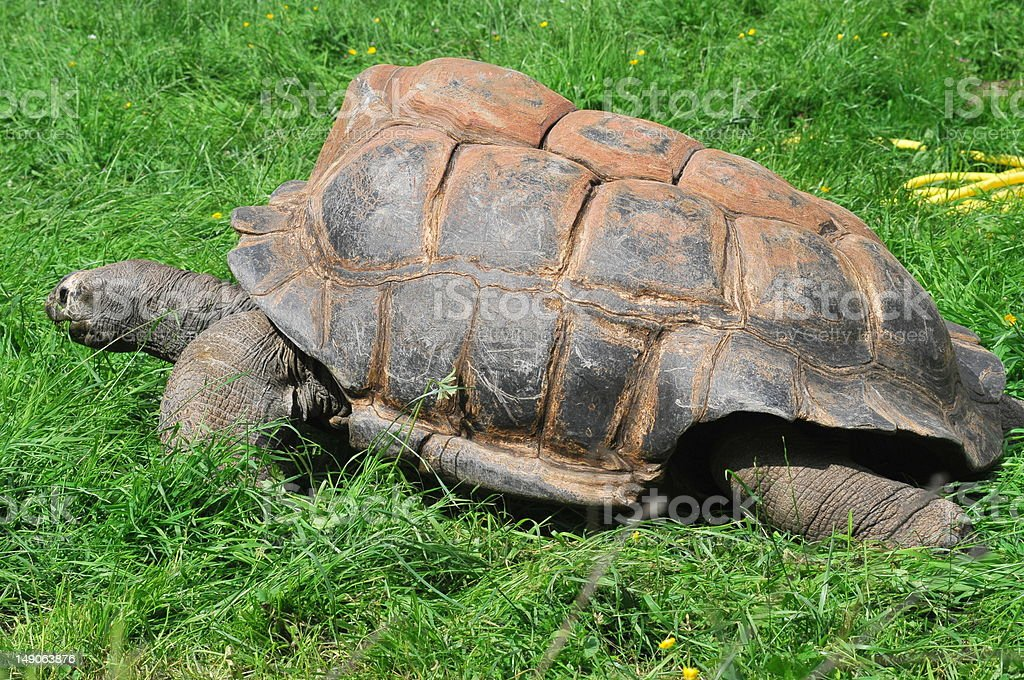 Tortue foto royalty-free
