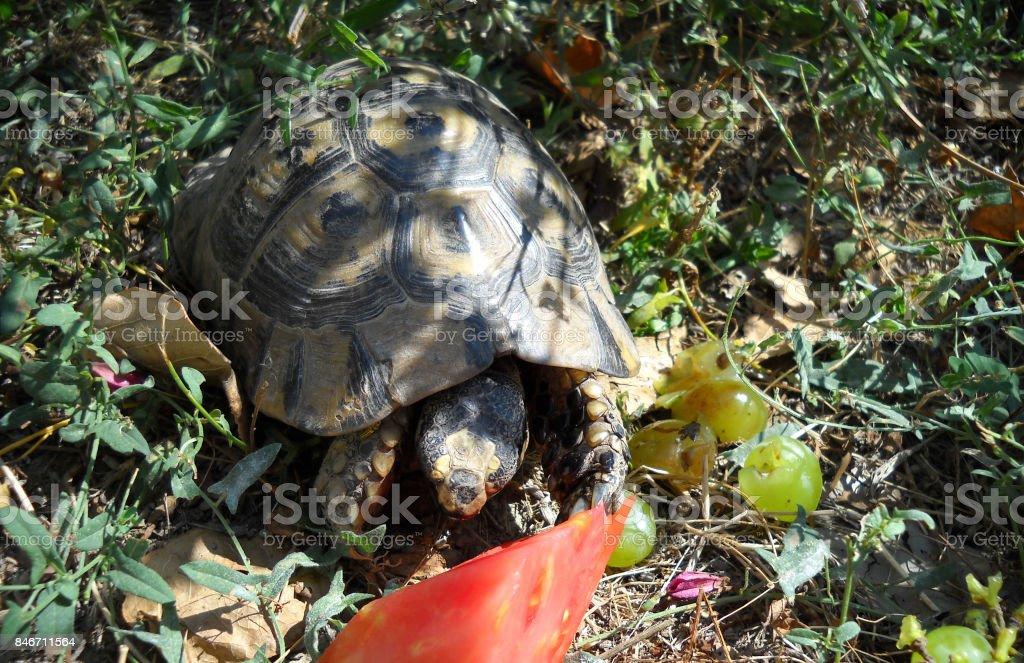 tortue stock photo