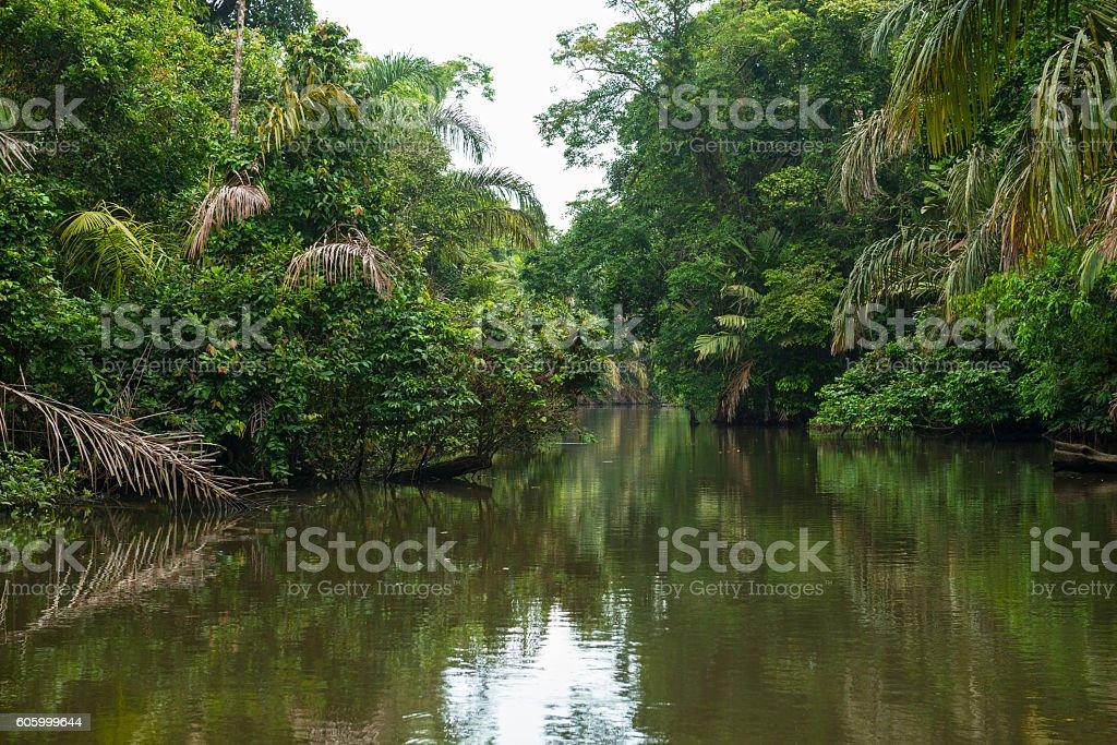Tortuguero Canal Trip stock photo
