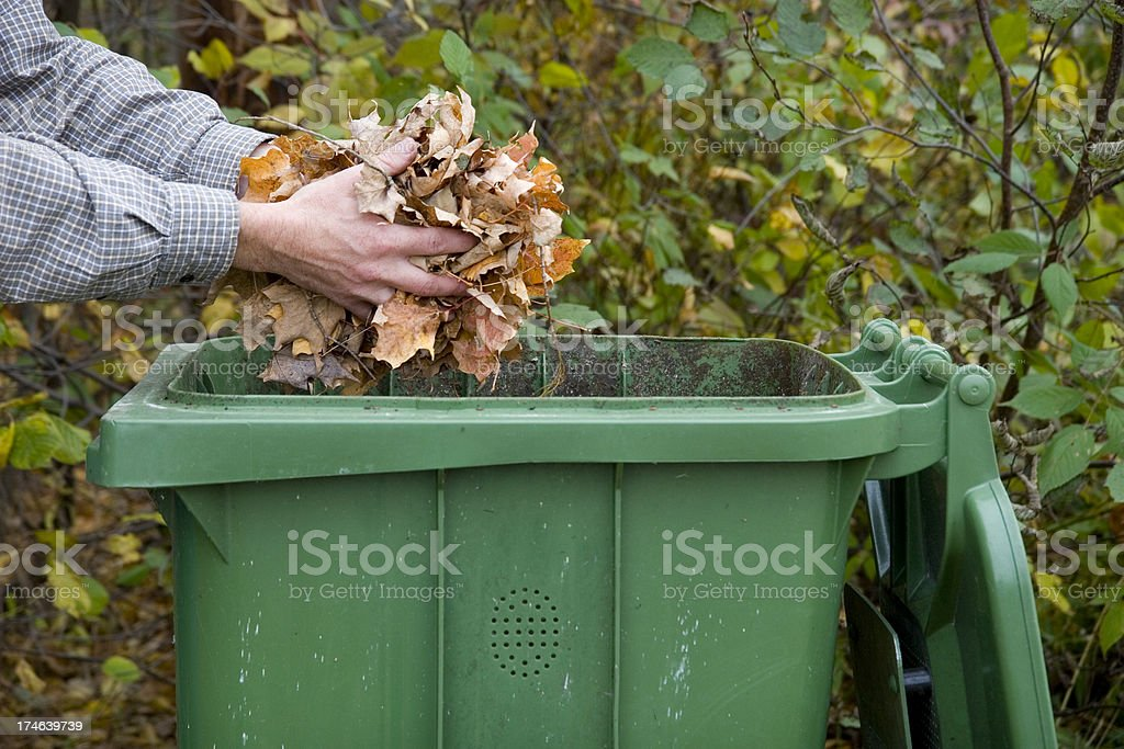Tossing leaves in the Green Bin stock photo