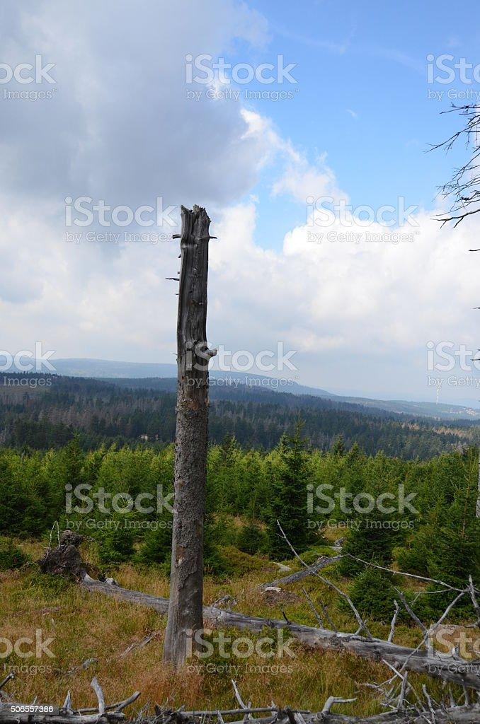 Totholz im Wald stock photo