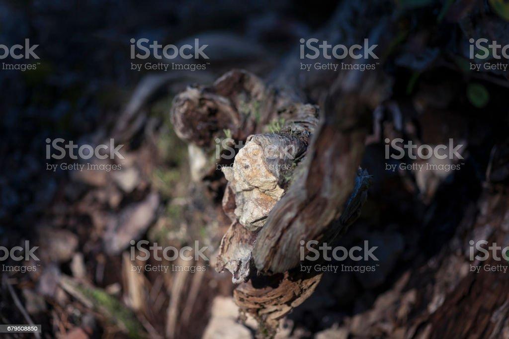 Totholz stock photo