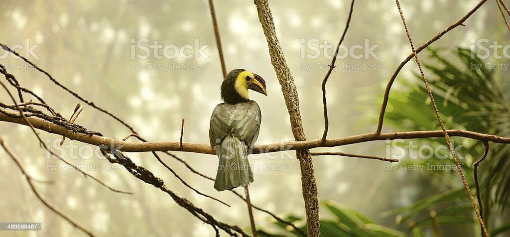Toucan in the wild stock photo