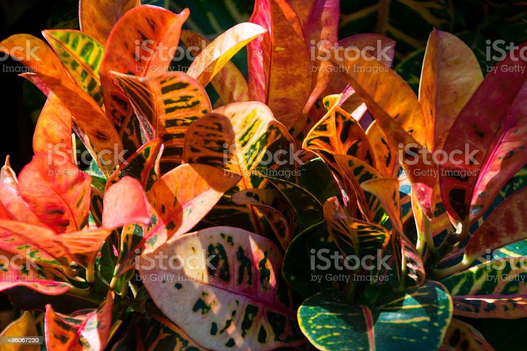 Touch of Autumn stock photo