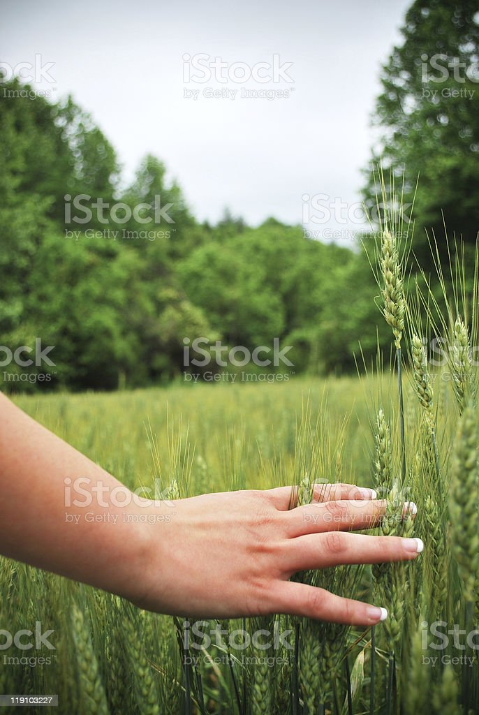 Touch of Life royalty-free stock photo