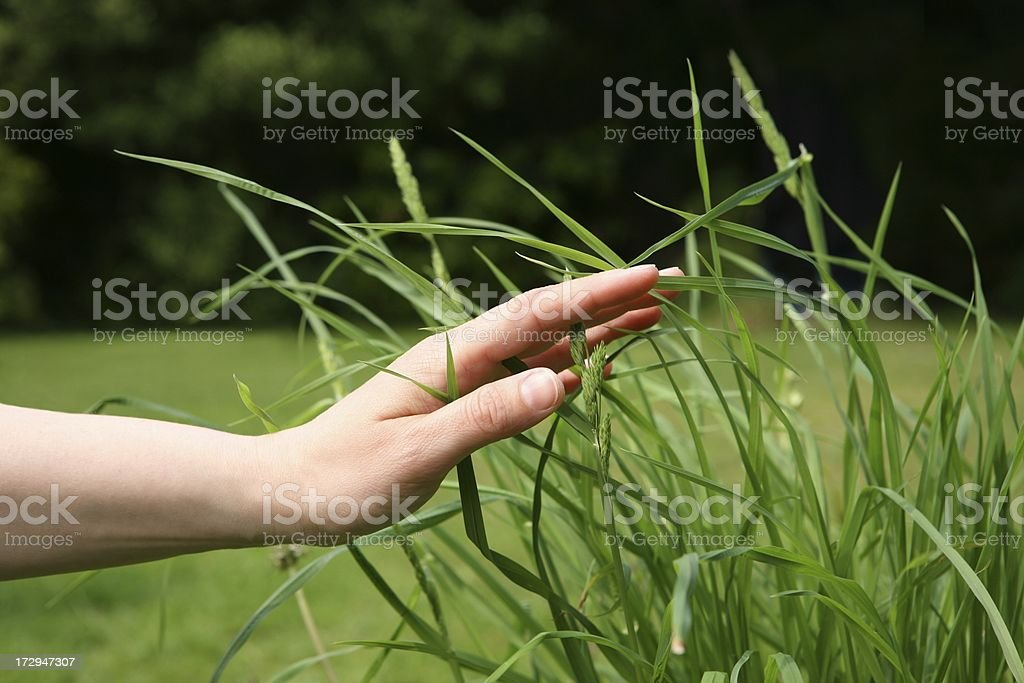 touch of nature royalty-free stock photo
