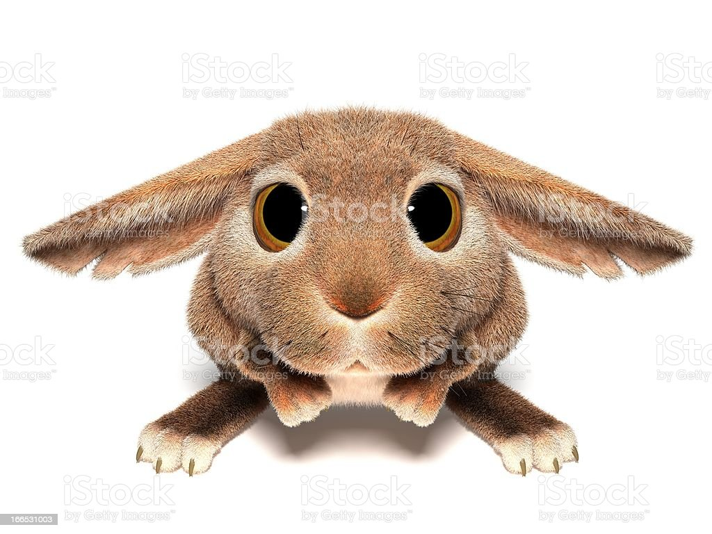 Touching rabbit stock photo