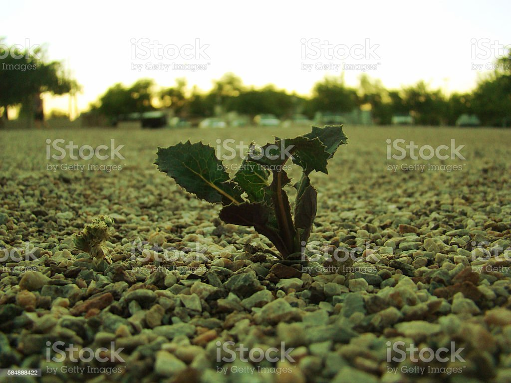 Tough Growth royalty-free stock photo