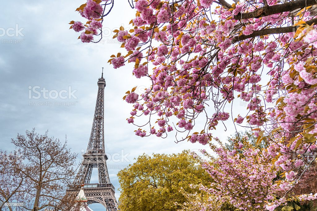 Tour eiffel tower in paris during the spring blossom season stock photo