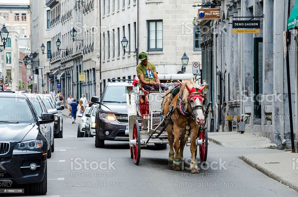 Tour guide on road in horse carriage buggy stock photo