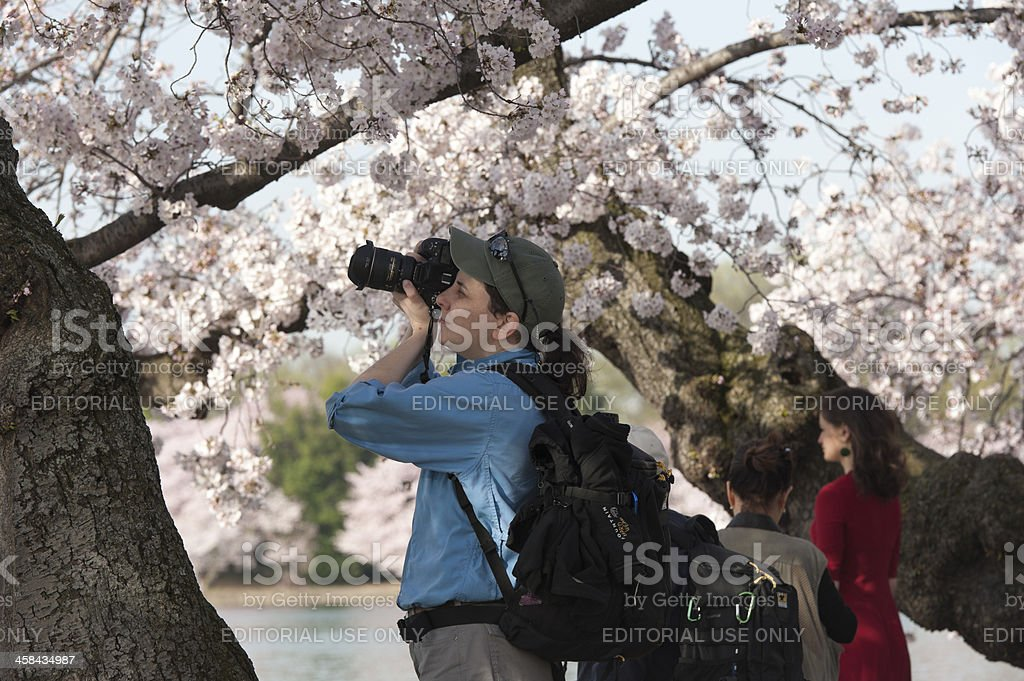 tourist are looking at the cherry blossoms, tidal basin, washington stock photo