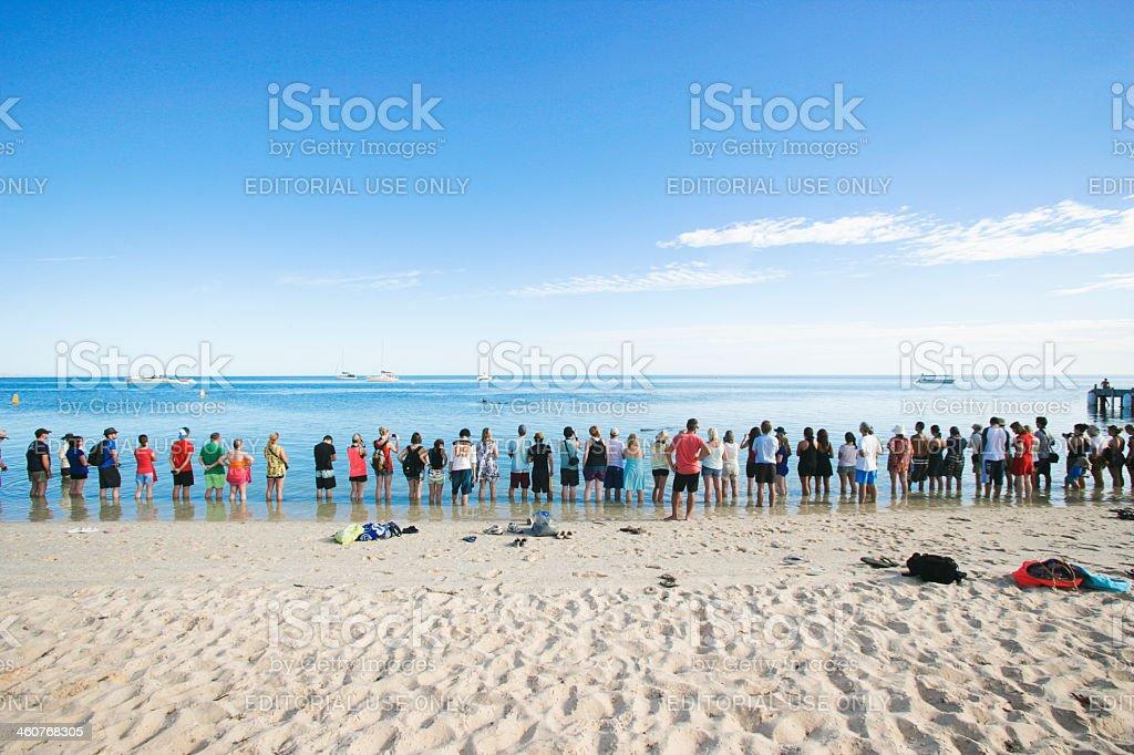 Tourist at dolphin show Monkey Mia in Western Australia stock photo