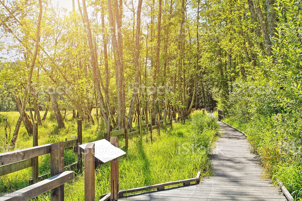 Tourist facilities in french natural reserve swamp with stilts path stock photo