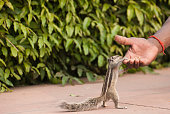 Tourist guide feeding a squirrel in Agra