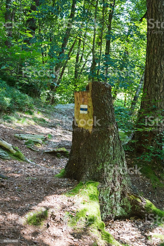 tourist mark on tree trunk stock photo