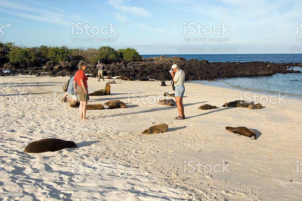 Tourist photographing sea lions on Galapagos Islands stock photo