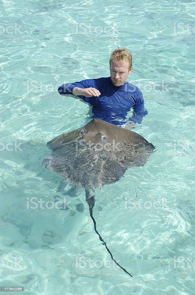 Tourist playing with stingray in a lagoon royalty-free stock photo