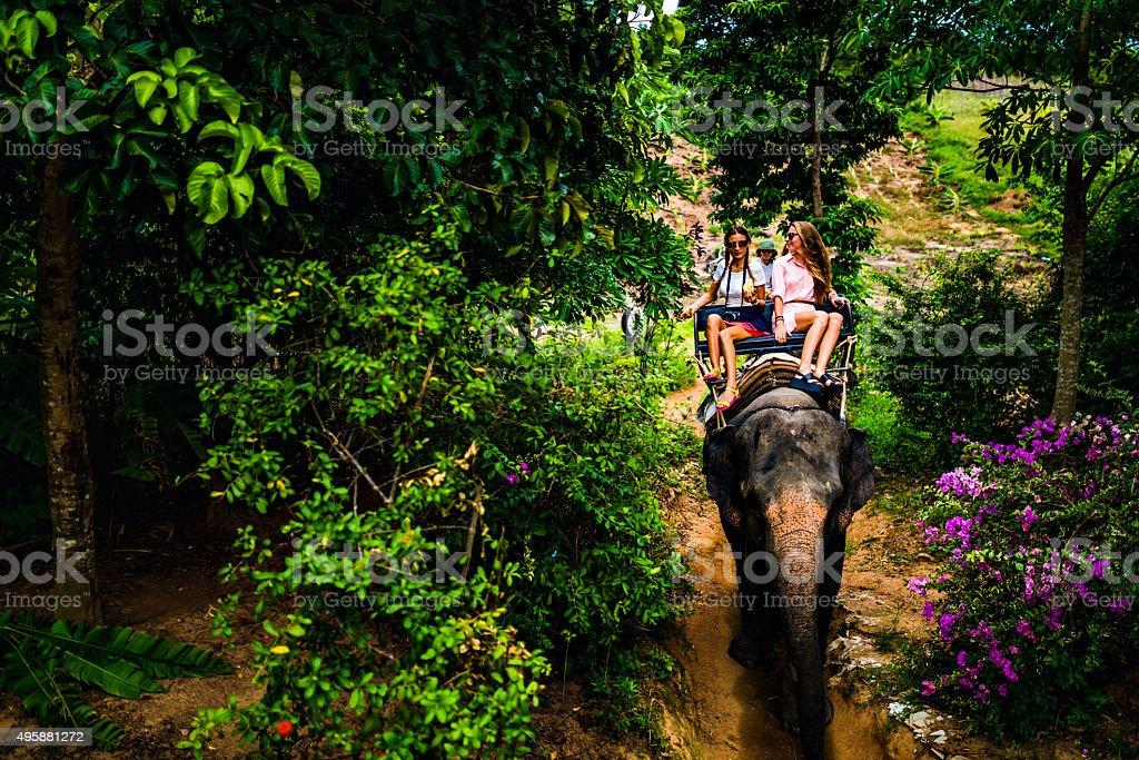 Tourist safari elephant trekking stock photo